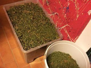 La marijuana sequestrata dalla Polizia