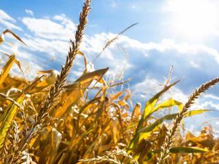 Agricoltura_allarme siccità in tutta Italia