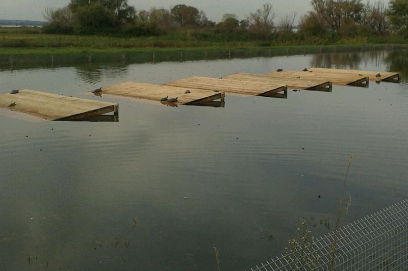 Trasimeno traslocate tartarughe del centro ittiogenico for Lago per tartarughe